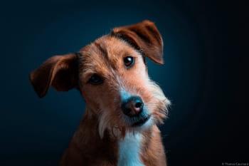 Portrait en studio de mon chien
