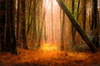 Photo prise dans une clairière en forêt